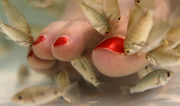 Would you let fish eat your feet cheap wine and panty lines for Fish eating dead skin pedicure